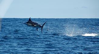 castafari sport fishing & deep seas fishing: news. cape cod, Fishing Bait