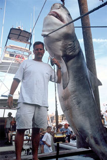 Deep fishing cape cape fishing chartercape world for Cape cod deep sea fishing
